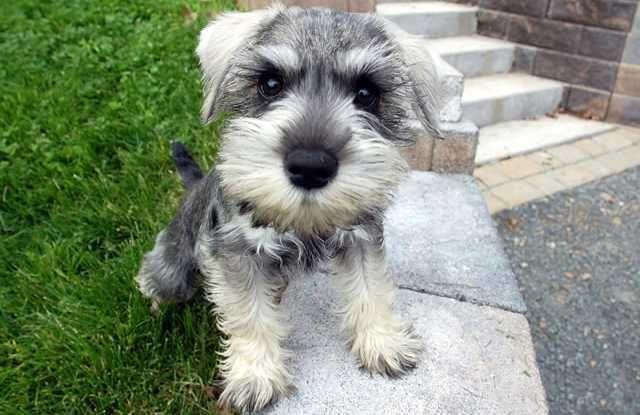 Conheça as raças de cães mais charmosas e lindas