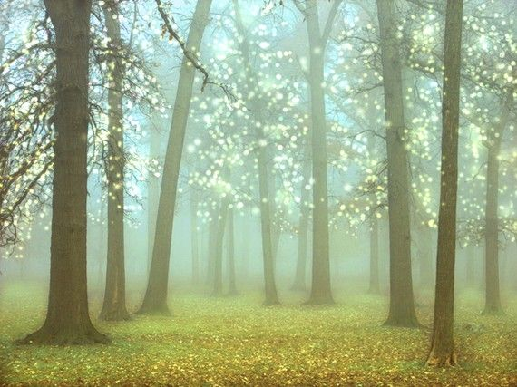 beautiful forest photograph $30