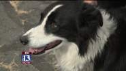 KEARNS, Utah – A dog found in Utah more than two years after its owner reported it missing is returning...