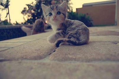 Cutie Real ?!♥