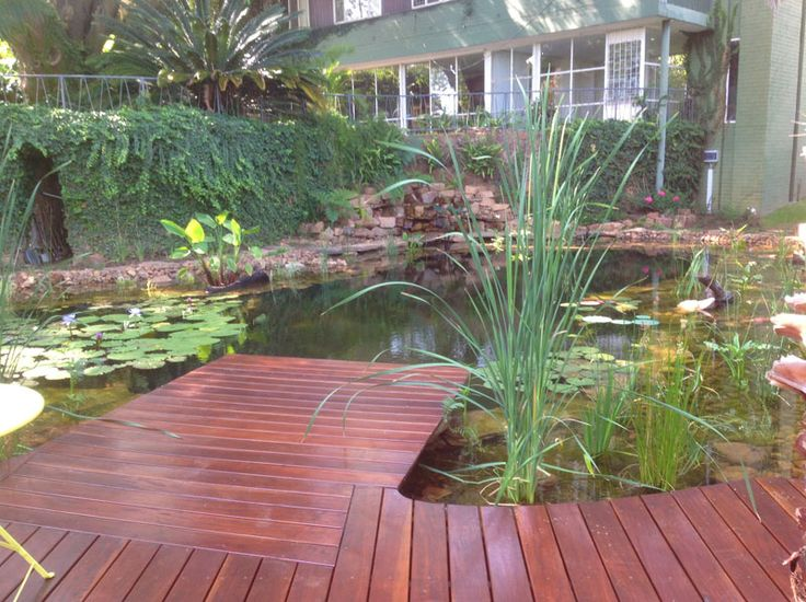 <b>Natural swimming pools use plants to filter the water instead of chemicals and look gorgeous while doing it.</b>