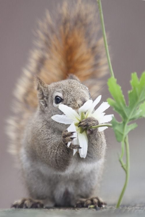 Squirrel smelling the flowers... by Andre Villeneuve.