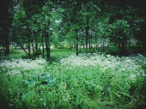 CityForest #oulu
