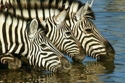 Safari Clothing and More