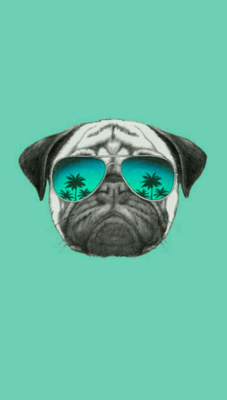 Wallpaper Pug Tumblr!! Papel de parede Pug Tumblr!! Segue aí q tem muuitooo maais!!!❤❤❤ -WallpaperTumblr