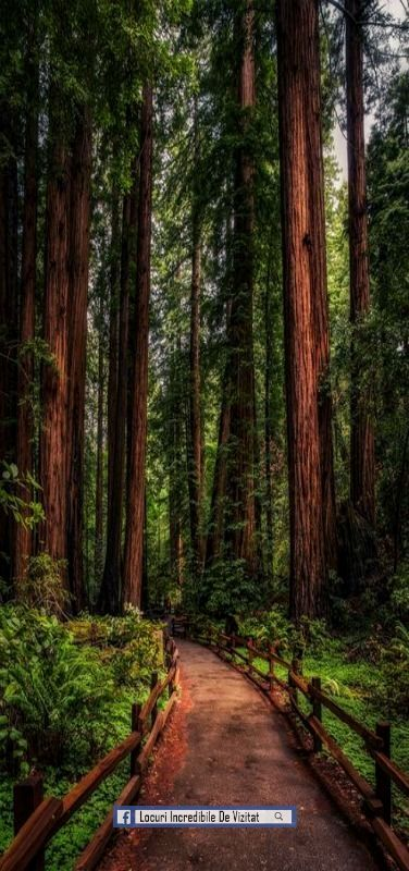 Redwood Path, Muir Woods, California, SUA