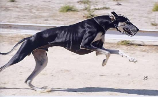 10 Interesting Dog Breeds That Originated In India #rarecatsbreeds