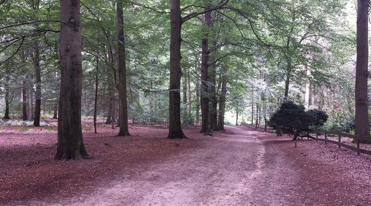 Een prachtig bos in de Nederlandse Posbank!