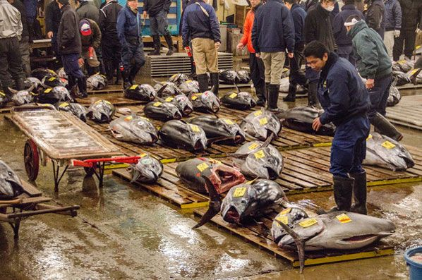 An Inside Look at Tsukiji Fish Market, Tokyo via @caskifer