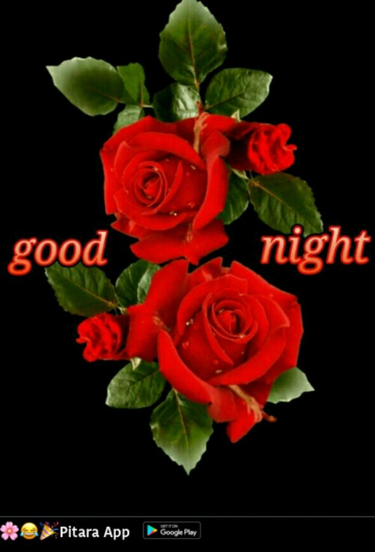 Gute Nacht, Daizo. ⭐