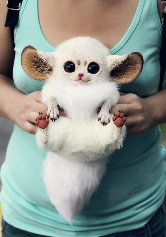 Inari Foxes... I had no idea furbies were real...makes me think of the little guy on Madagascar!
