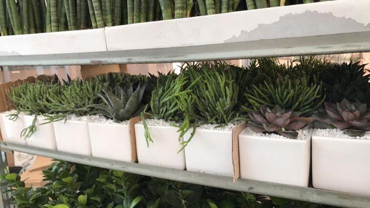 Succulente produzione Paganopiante sono pronte per raggiungere i nostri rivenditori.