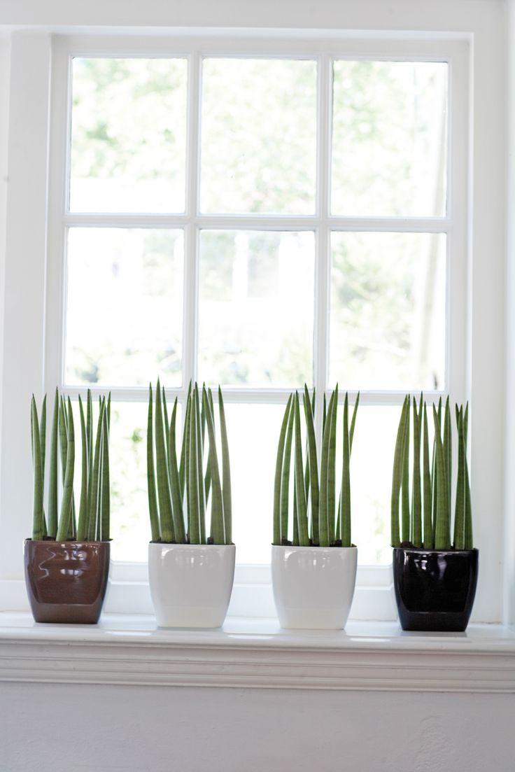 Planten in de vensterbank tegen inkijk.