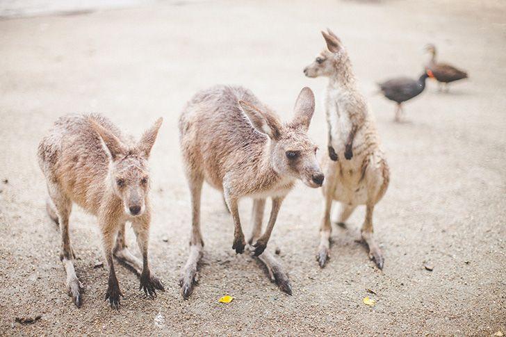 Wildlife Habitat Port Douglas, Australia by @Eleonore Nygårds Bridge