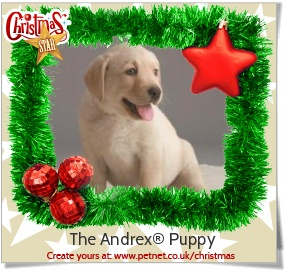 The Andrex® Puppy