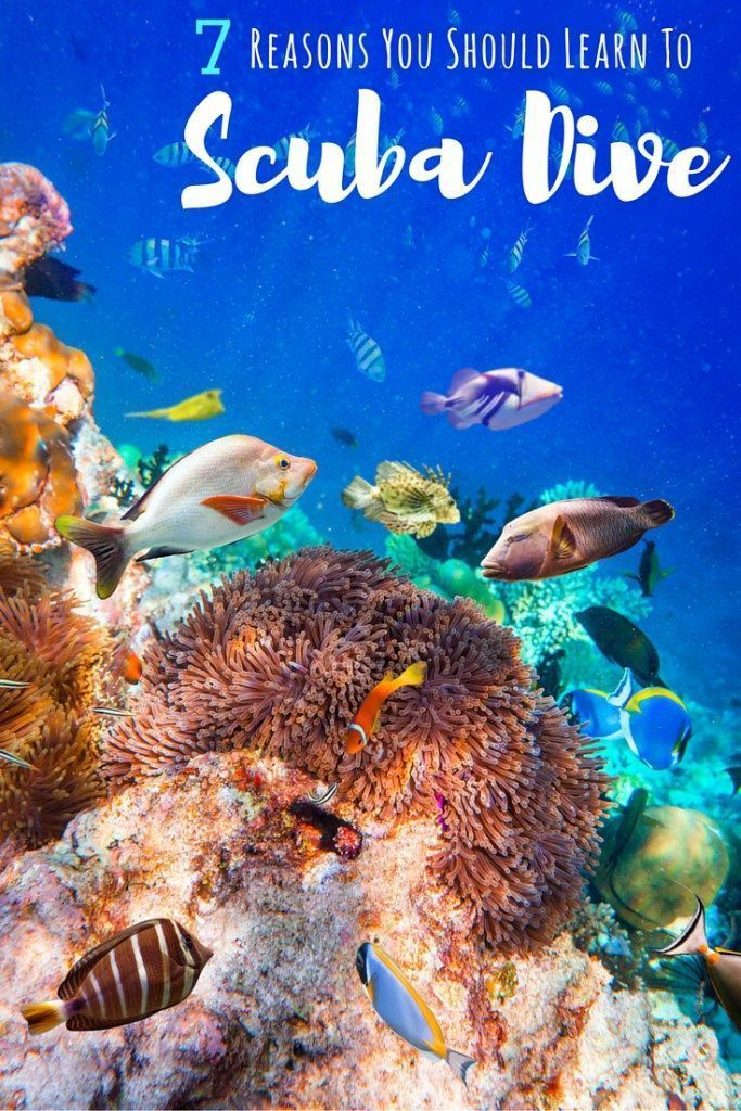 7 Reasons to Learn to Scuba Dive | Scuba diving can be an incredible adventure! Here are just some of the many reasons to try it | http://www.theflyawaylife.com
