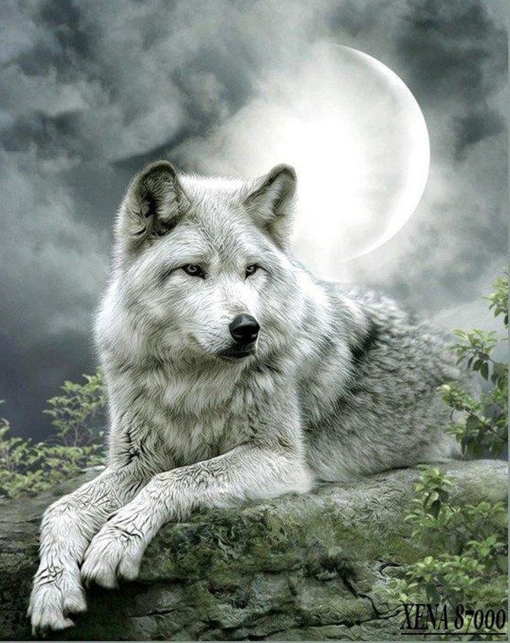 white wolf against a cloudy sky with the silver moon