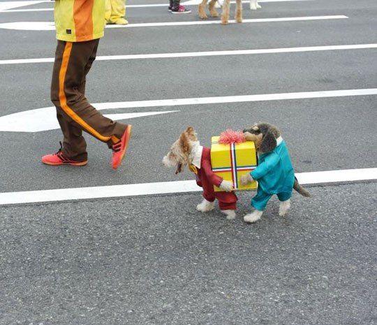 Great Halloween Pet Costume