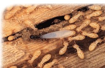 Termite Control Bangalore