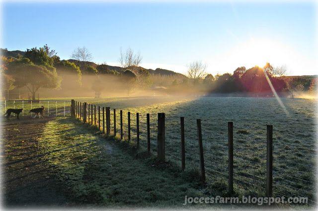 Jocees Farm - Early Winter Morning