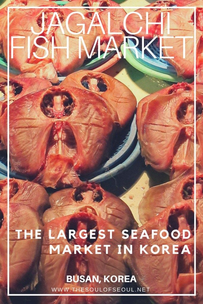 Jagalchi Fish Market, Busan, Korea: Jagalchi Fish Market is a must see for any visitor or tourist to Busan, Korea. Here is what you should order and how to get there. Don't miss this! This is one of the top tourist sites in Busan, Korea.