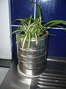 Je pense que je vais enfin avoir des plantes aromatiques