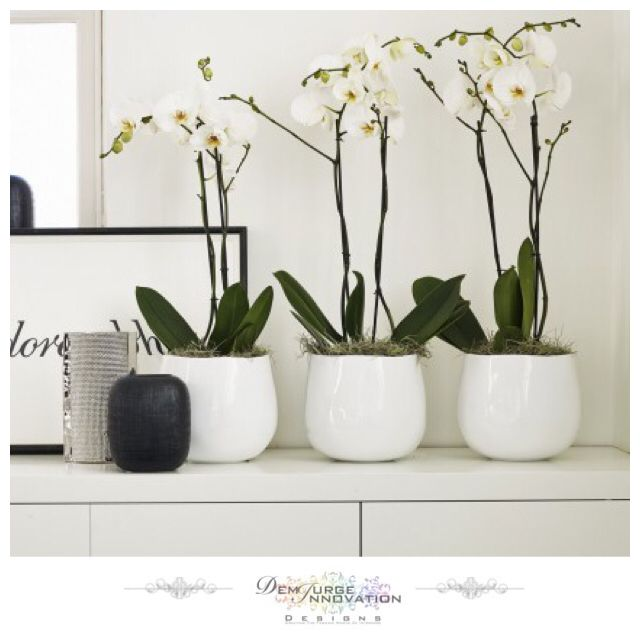 Rounded Bulb Pot - Perfect in its elegant and graceful simplicity. The clean, pure white gloss finish and the natural looking shape of this pot is just right for displaying a gorgeous off white orchid. Why not try arranging three together in a row on a low-lying bench or shelf to promote a subtle sense of Eastern harmony - Available Now #InteriorDesign #InteriorDecoration #LuxuryLiving #Furniture #HomeJewellery #Stylish #Quality #Elegant #Modern #Trend #HomeFashion #Lifestyle #Decor