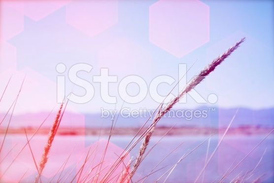 Sea Grass and Seascape with Bokeh Filter royalty-free stock photo