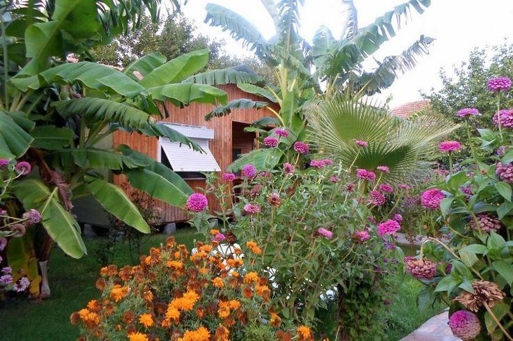 Herzlich willkommen in unserem Boutique-Hotel Estelar. Zu Füßen von bewaldeten Bergen liegt die wunderschöne Küste von Cirali. Der 3 km lange Strand wird von Felsen und Klippen eingerahmt.   #cirali#ciralihotel #ciralipension #ciralihostels #pension #hostel #lodge #ciralilodge #layover #urav #antalyahotels #antalyapension #antalyalodge #antalya  #mediterranean #chimera #ciraliapart #antalyaapart #bungalow