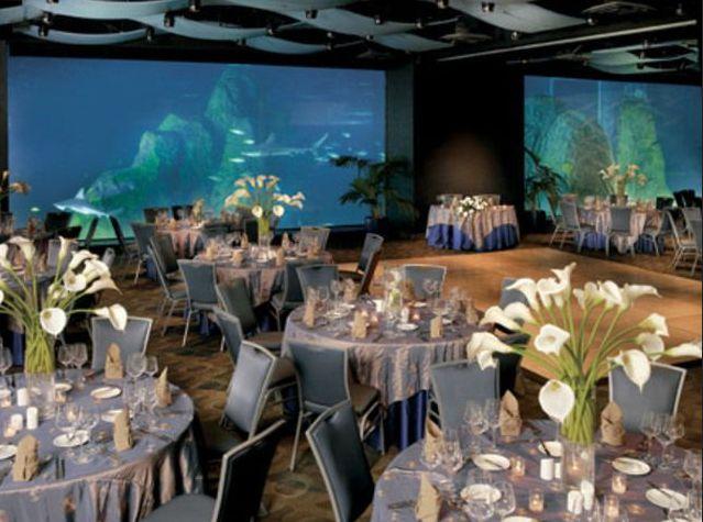 Unique Wedding Venues Nj adventure aquarium camden nj adventure aquarium coupons