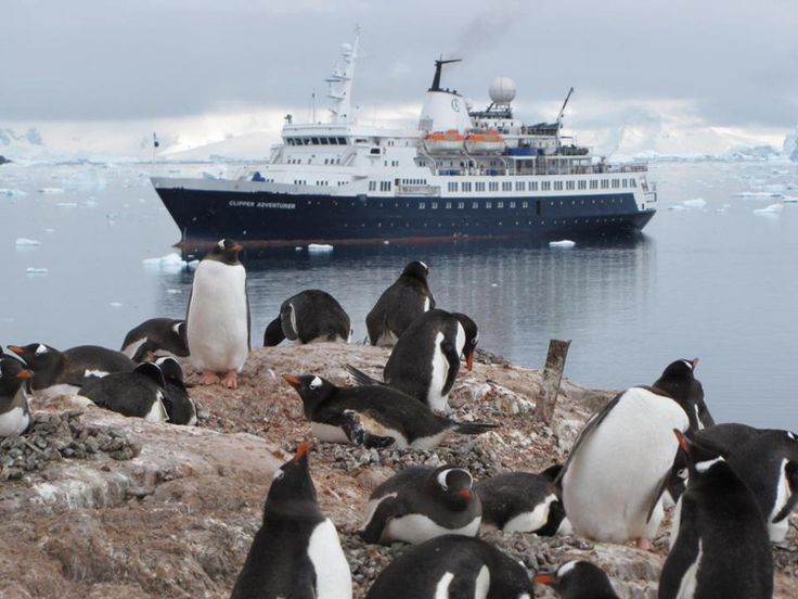 Be an Arctic Explorer on Kensington Tours' North Pole Expedition #Cruise