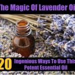 The Magic Of Lavender Oil – 20 Ingenious Ways To Use This Potent Essential Oil