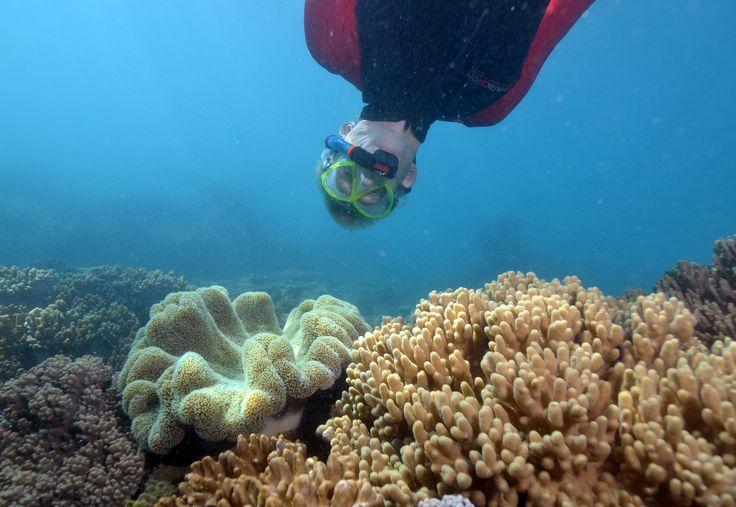 10 best snorkelling sites in Queensland