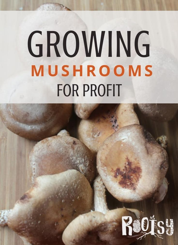 Looking for a way to make additional money on the homestead? Growing mushrooms for profit may be the answer. Start with one of these four reliable varieties and explore the possibilities   Rootsy.org