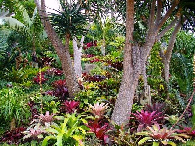 Tropical Garden Ideas Nz 1012 best tropical gardens images on pinterest | tropical garden