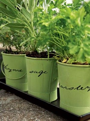 Top tips on growing herbs