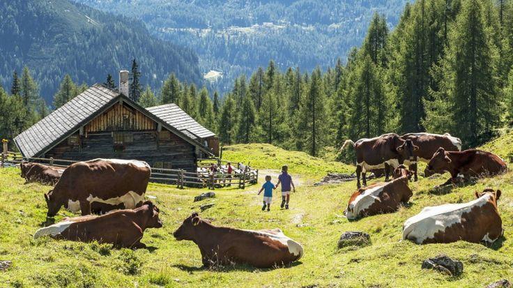 Alpakas, Bolzplatz, Lagerfeuer: Beim Ausflug zu diesen neun Berghütten kommen Kinder auf ihre Kosten - und ihre Eltern. Von SZ-Autoren erprobt.