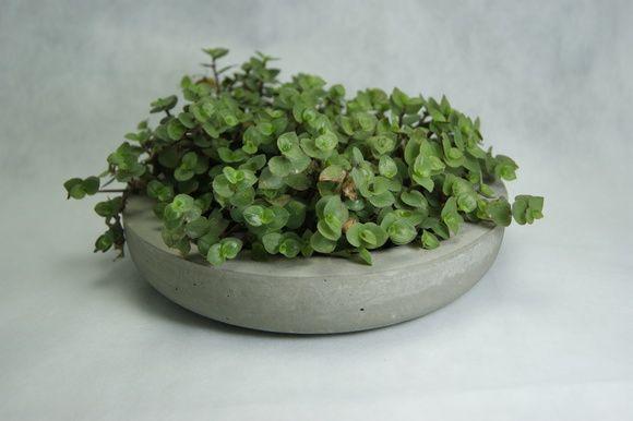 Vaso Pequeno Cimento Jardim Suculentas - Vaso de concreto - Jardim de cactos