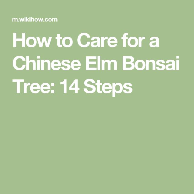 How to Care for a Chinese Elm Bonsai Tree: 14 Steps