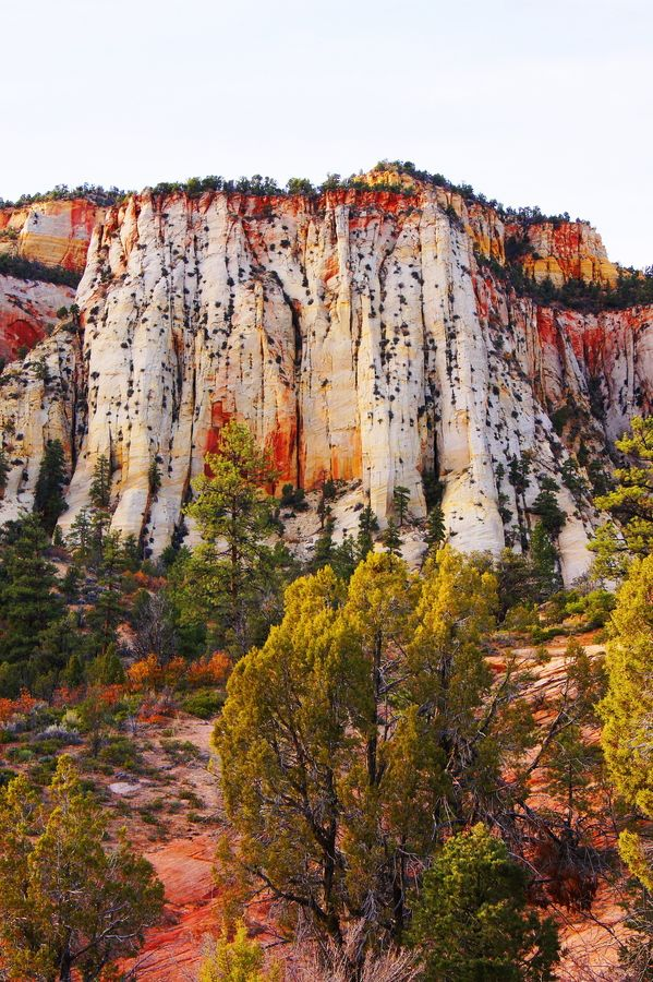 Gaze up at massive sandstone cliffs of cream, pink, and red that soar into a brilliant blue sky. Zion National Park.