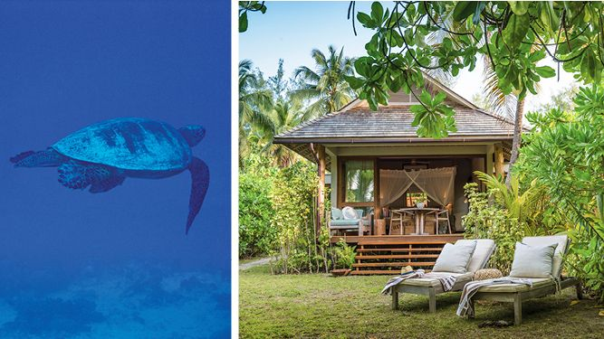 Dive with turtles off Vamizi Island or bliss out on Desroches in the #Seychelles. #Africa #Travel #ocean #summer