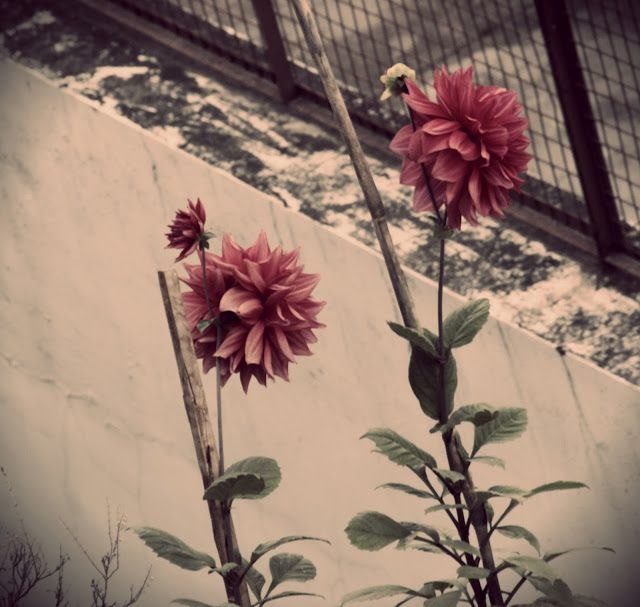 Tamanna S: #nature #flower #beauty
