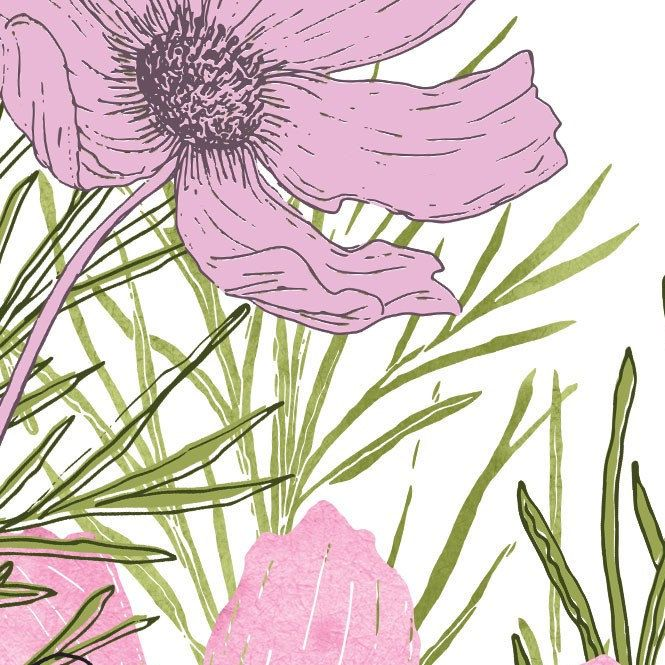 Cosmos Flower Clipart Pink Watercolor Illustration Line Art Etsy Watercolor Illustration Line Art Flower Clipart