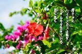 短歌 三浦綾子 鮮やかに ハイビスカスは 咲きつぎぬ…