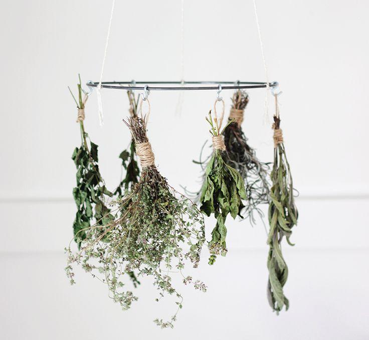 Les 25 meilleures id es concernant faire s cher de la lavande sur pinterest cultiver de la - Quand tailler les lavandes ...
