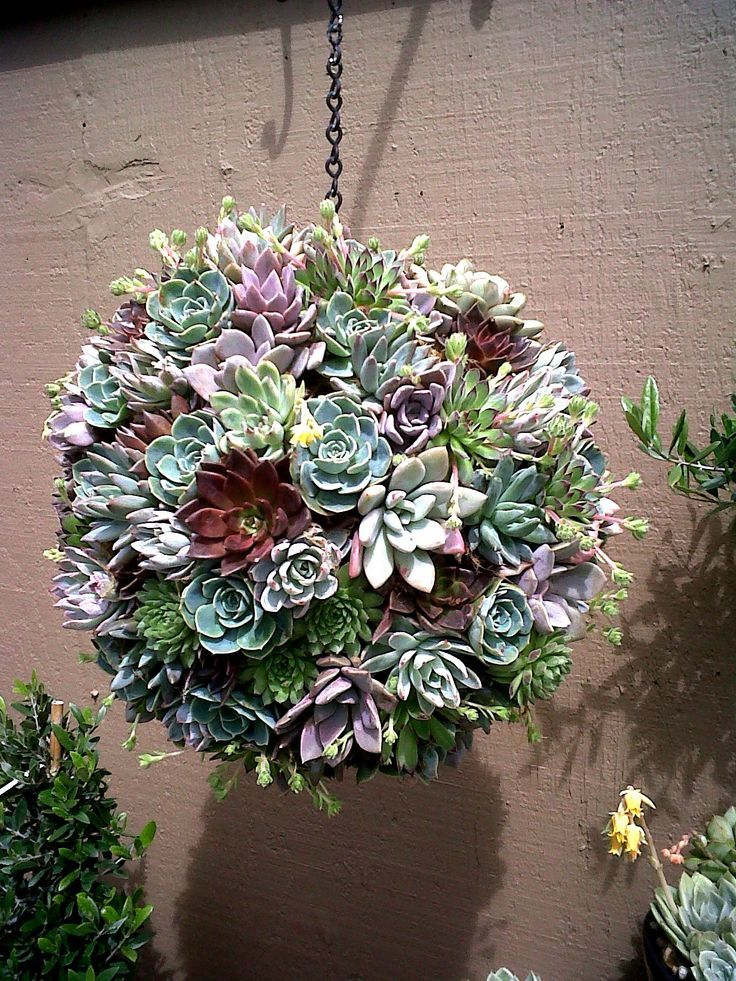 """Hanging succulent """"garden"""" - I want to make one!"""