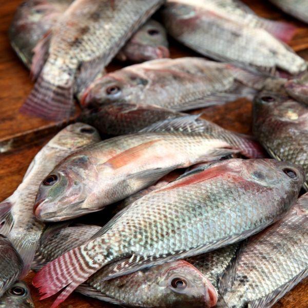 Jak gotować ryby?