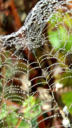 If only a wedding dress could be as pretty as a Spiderweb