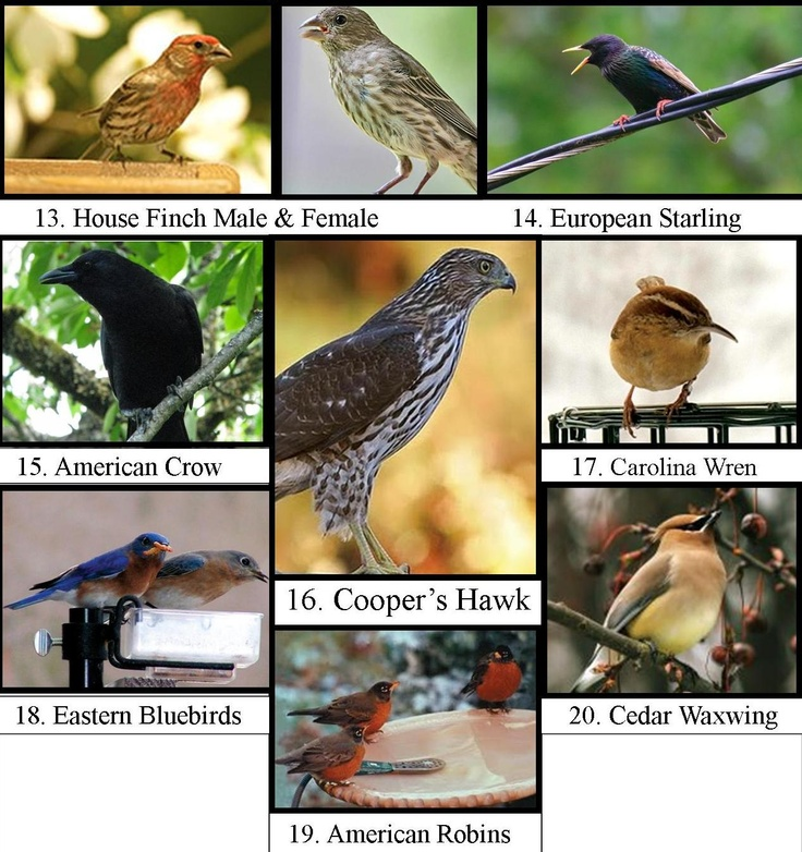 Wild Birds Unlimited: Most Common Winter Birds In Michigan