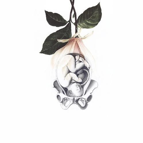 The Language of Birth • By Stepha Lawson. Birth Art, Birth Inspiration, Pregnancy, Feminine Wisdom, Goddess, Baby, Birth, Midwife Art, Pregnancy Art, Baby Art, Botanical Illustration, Baby Shower, Nursery Room, Labor, Labor and Delivery, Birth, Prints for Sale